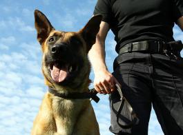 Guía Canino en Servicio de Vigilancia con Perros
